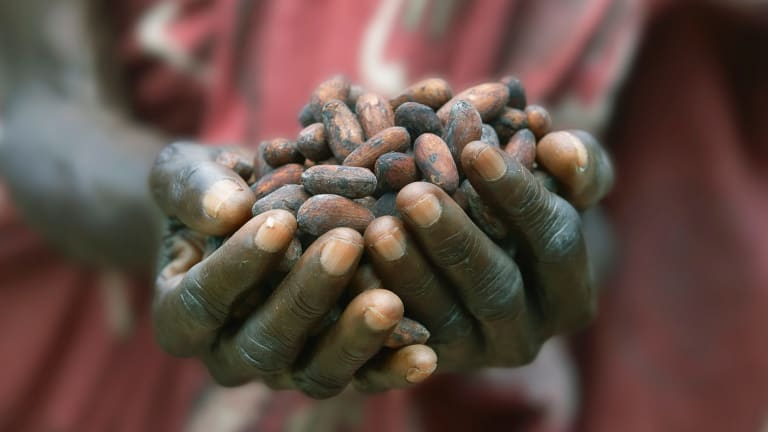 Fears the price of cocoa beans will soar as the deadly Ebola virus crosses into the Ivory Coast and Ghana.