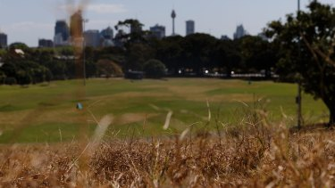 Record heat across parts of Sydney at the weekend has contributed to the baking of the city's parks and gardens.