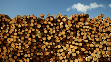 Loggers are accused of rorting compensation to leave the industry.