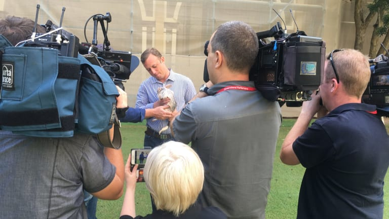 Environment Minister Steven Miles, pictured holding Tashi at Parliament on Saturday, said chocolate bilbies were a better choice for Easter.