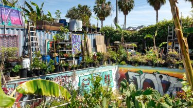The backyard of 'gangsta gardener' Ron Finley in South Central Los Angeles, includes a graffiti-covered, plant-filled swimming pool.