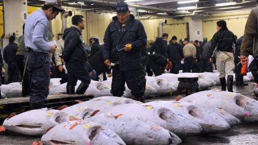 Fishmongers inspect large bluefin tuna before auction at Tokyo's Tsukiji fish market.