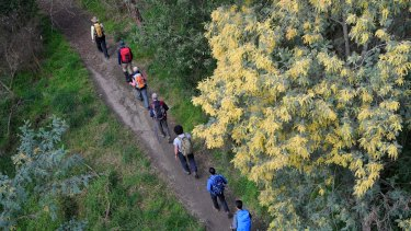 Bushwalkers and other travellers may inadvertently spread a fungus that is deadly for dozens of native plant species.