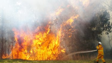 Firefighters tackle an out-of-control bushfire in Nowra.