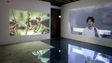 James Eisen's video and sculptural installation Beauty &.