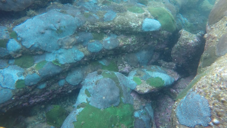 Sydney's coral reefs in better health.