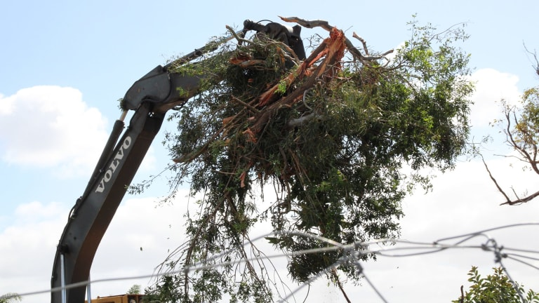 Trees being demolished on a Karrinup private development site.