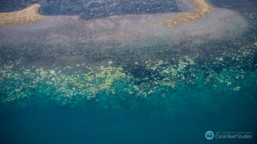 The National Coral Bleaching Taskforce has found record levels of bleaching on the Great Barrier Reef.