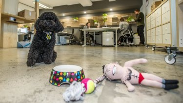 Coco's water bowl and toys are kept in her very own staff locker at the Rowdy Digital office in Civic.