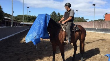 The turf club's mounted division consists of retired racehorses retrained for life after the track.