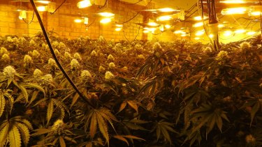 Cannabis grow houses in Victoria are increasingly state-of-the-art.
