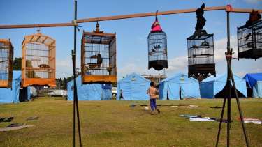 Pet birds hang in cages from a makeshift standat an evacuation camp in Klungkung, home to thousands of evacuees.