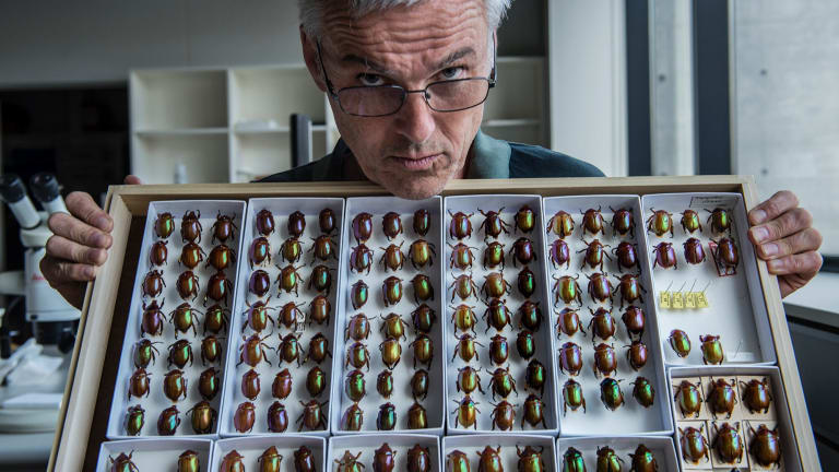 Chris Reid, a research scientist at the Australian Museum, with a tiny section of the huge beetle collection.