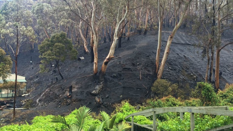 Greenery stands out against a scorched hillside.