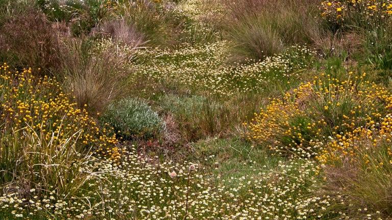 A created grassland garden in St Albans.