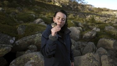 At home ... Hayley Bates in alpine country with a pygmy possum.