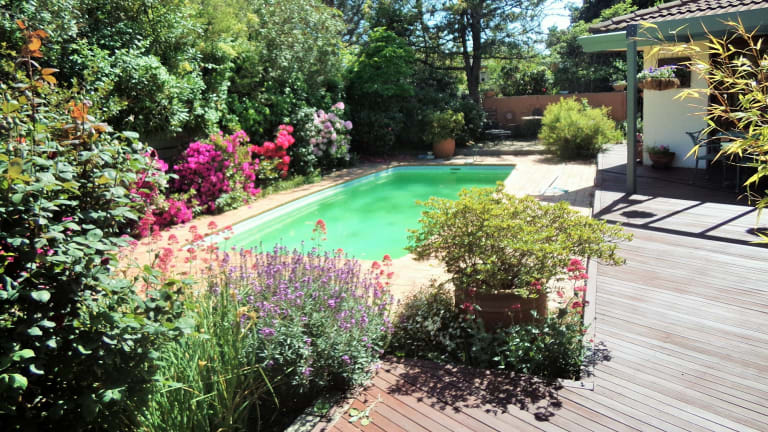 the canberra woman who turned her backyard pool into a giant fish pond