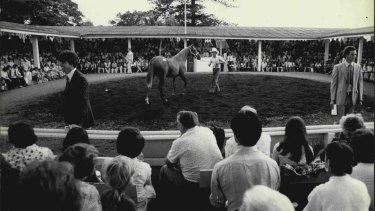 The Newmarket ring of William Inglis & Son in Sydney's east in 1978.
