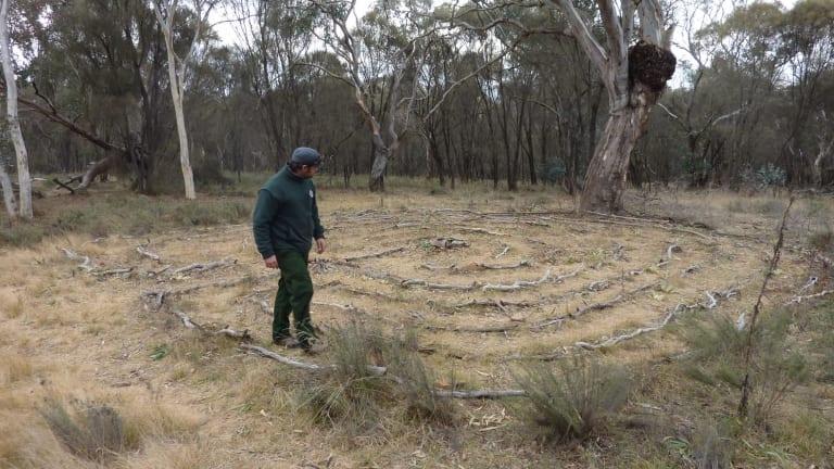 Ranger Luke McElhinney walking the Mt Ainslie bush labyrinth.