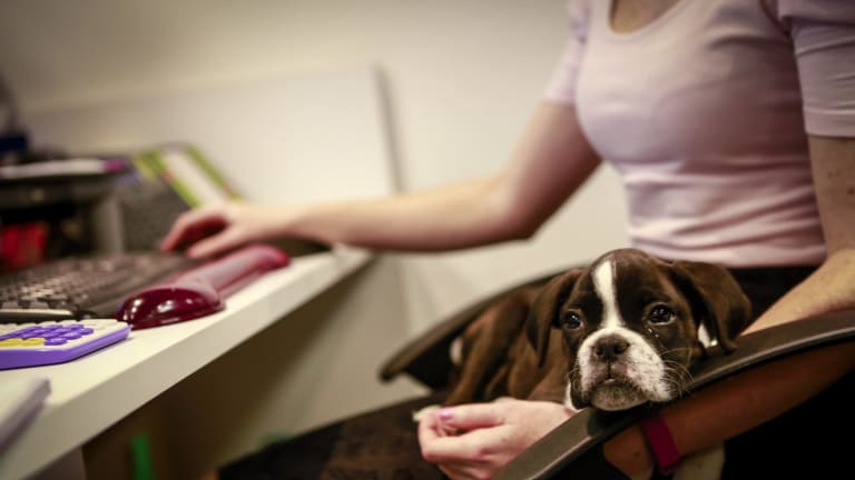 Allana Burns, receptionist with Trinity at WME Group, a digital marketing agency, on its bring your dog to work day.
