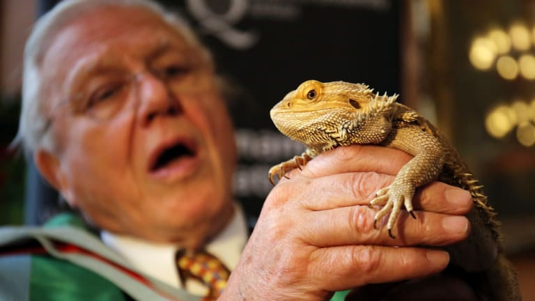 David Attenborough holding a bearded dragon.