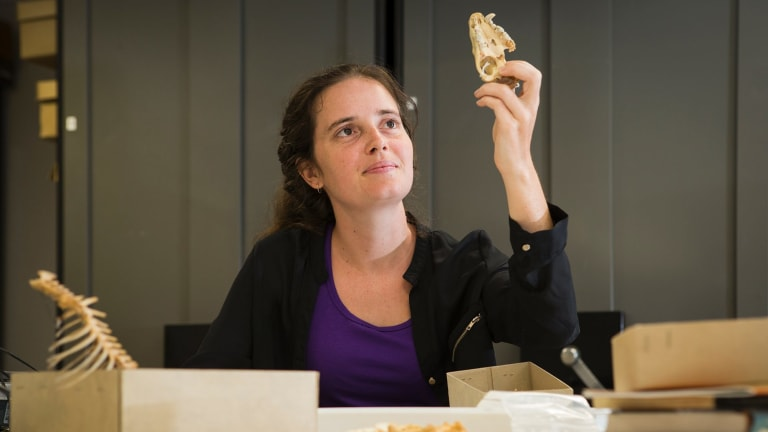 PhD student Shimona Kealy with the skull of a Tasmanian devil.