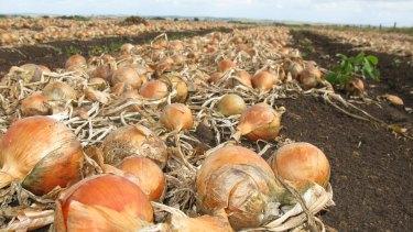 Onions.