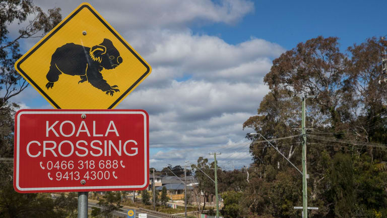 A koala crossing sign stands in front of a new housing development backing directly onto the Cumberland Plain Woodland corridor, a core koala habitat.