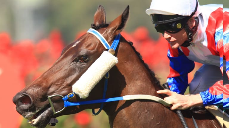 Under  a cloud: Mosheen wins the 2012 Vinery Stakes.