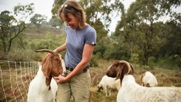 Elisabeth Larsen from Herds for Hire with a mob of South African boer goats at the Mount Annan botanic gardens.