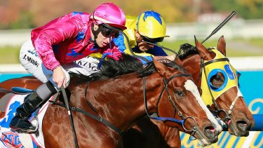 Strong chance: Miss Rose de Lago will contest Saturday's Myer Classic.