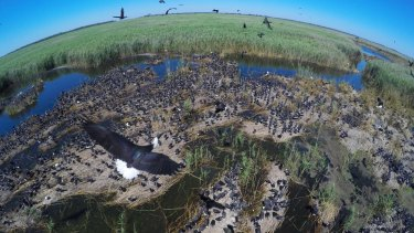 Drone-mounted cameras make it easier to capture images in difficult locations, like this ibis colony.