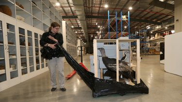 The Australian Museum's Anja Divljan managed the move to a purpose-built storage facility in Castle Hill.