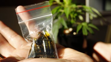 Medicinal cannabis may soon be legalised in Australia.