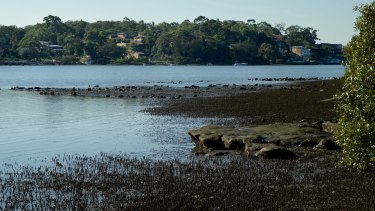Oyster Bay: Pollutants not going away.