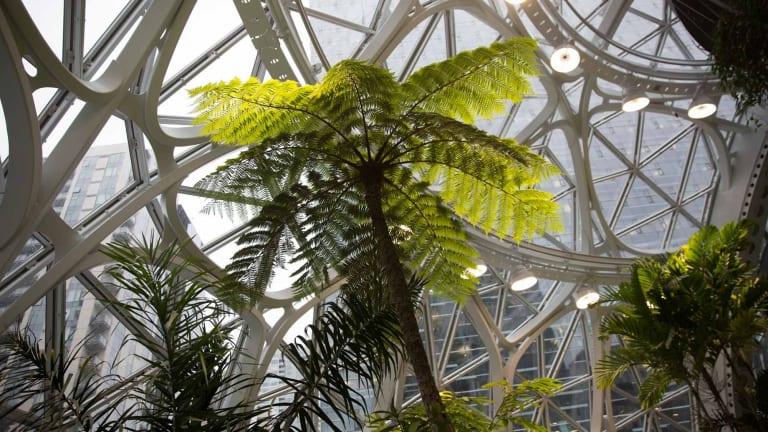 Amazon.com's new Seattle headquarters has 40,000 plants.