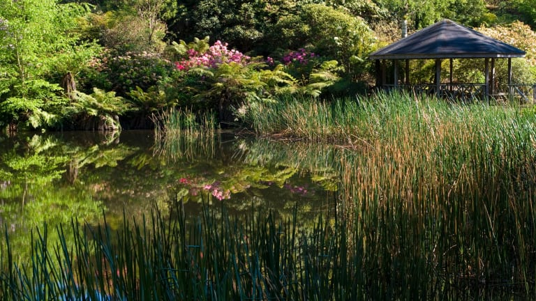 The Kurume bowl and pond in the National Rhododendron Gardens, which will become part of the new Dandenong Ranges Botanic Garden.
