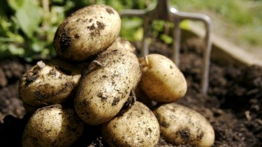 How can the biggest player in Australia's $625 million potato market go bust? Profit margins are very slim and the Chinese owner of Oakville Produce had high hopes three years ago.