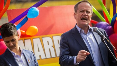 The Turnbull government should immediately allow MPs a free vote on gay marriage, says Bill Shorten.