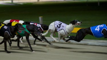 Greyhound racing has been under pressure in Queensland after a live baiting scandal.