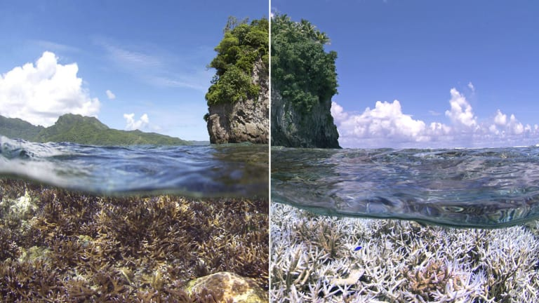 A before and after image of coral bleaching in American Samoa.