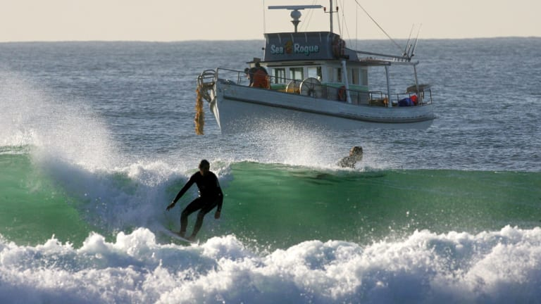 A shark net contractor checks his nets daily during the swimming season off Cronulla.