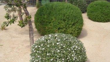 A Fiona Brockhoff-designed garden at Flinders near Melbourne on the Mornington Peninsula.