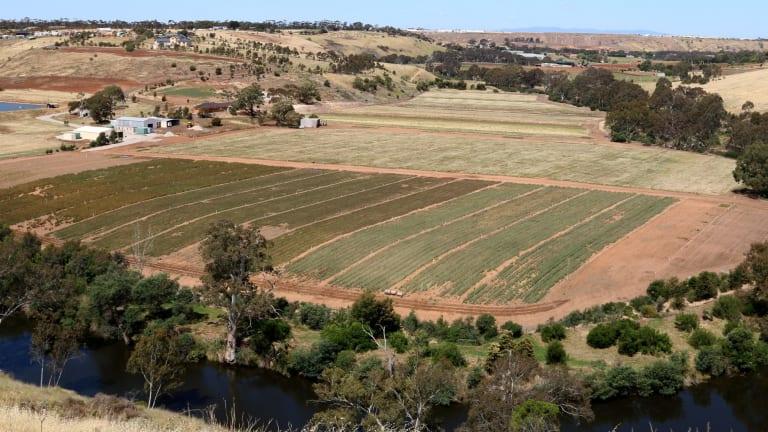 Flora Victoria's grass crops, in Keilor.