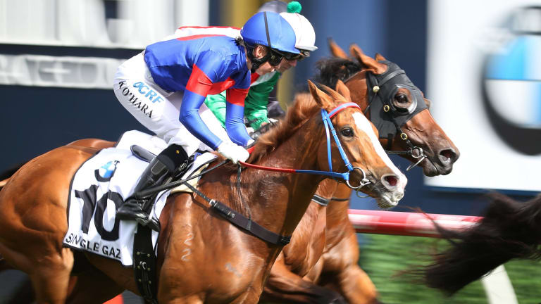 Single Gaze became the first Canberra horse since 2005 to run at the Melbourne Cup.