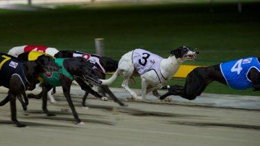 Greyhound once banned over live-baiting scandal wins $30,000