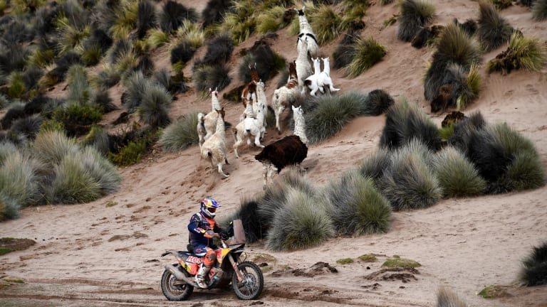 Toby Price scatters some local wildlife on stage seven of the Dakar Rally.