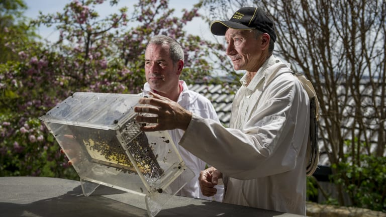 Beekeeper Ian Crabb  re-homing a bee swarm with newcomer Kevin Wode (left).