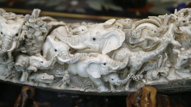 Carvings of elephants and other animals are shown inside a mammoth ivory tusk for sale in the window of a Chinatown shop in San Francisco this week.