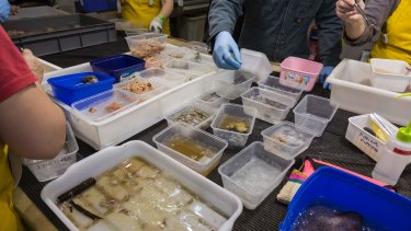 Scientists sorting the haul in the laboratory aboard the RV Investigator.